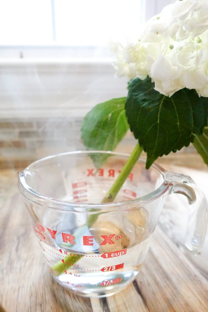 How to Revive Your Wilted Hydrangea Cuttings